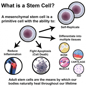 what-is-a-stem-cell-image-sarasota-med-spa