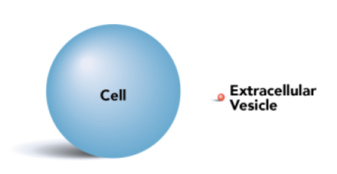 extracellular-vesicle